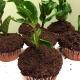 Oreo Dirt Cupcakes